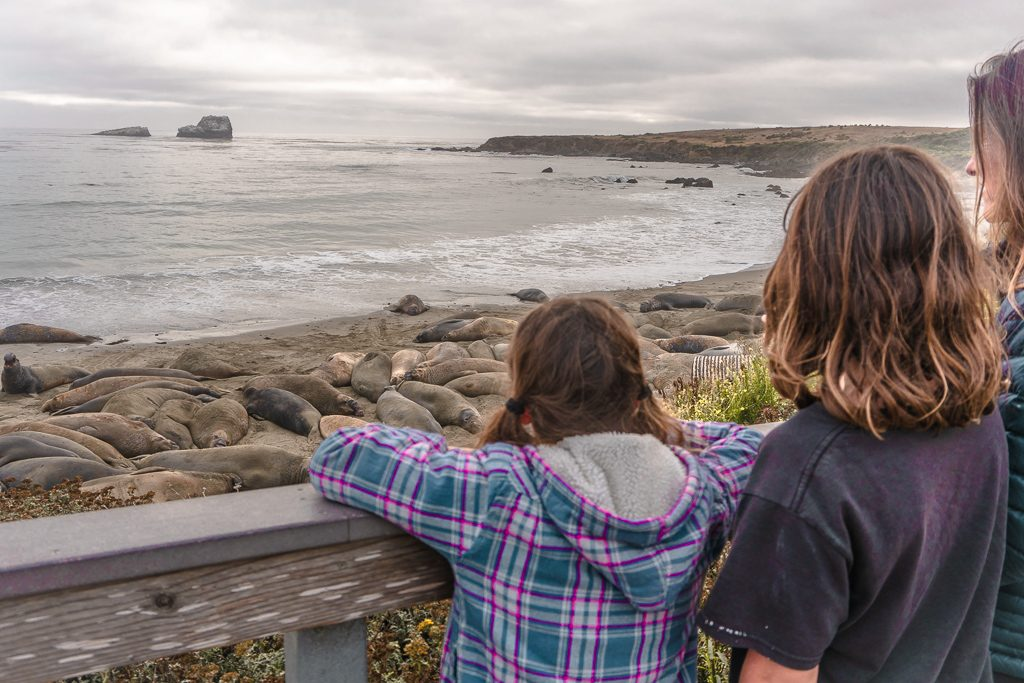 Stop at Elephant Seal Beach near Big Sur on your west coast road trip