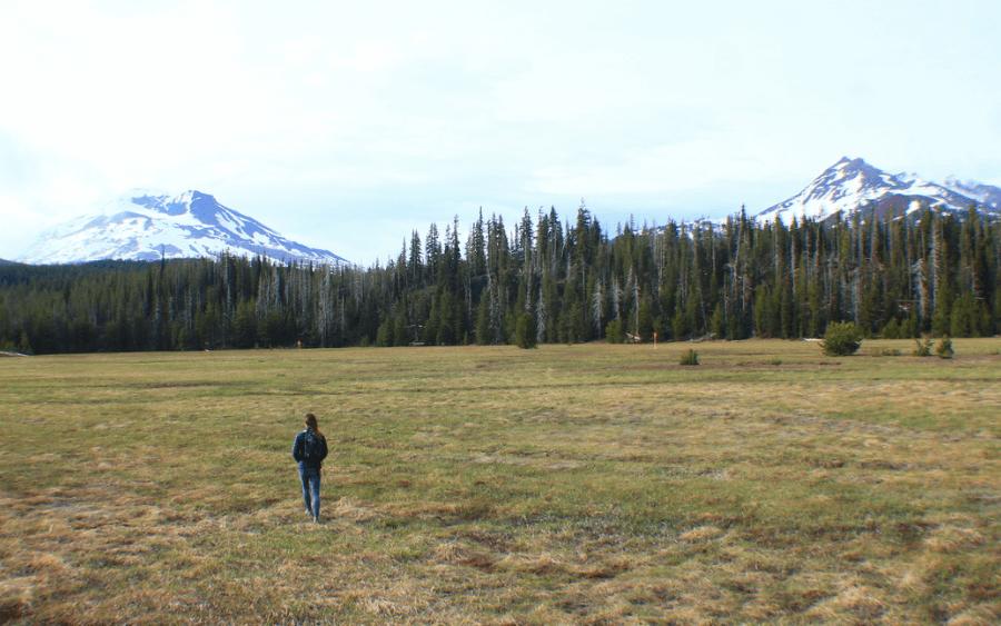 Meadows along the Cascade Lakes Highway