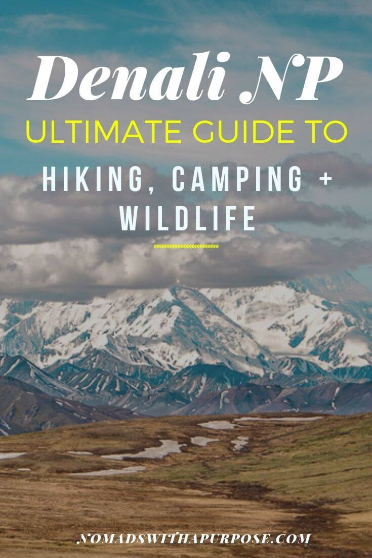 Denali National Park: Ultimate Guide to Hiking, Camping and Wildlife Viewing