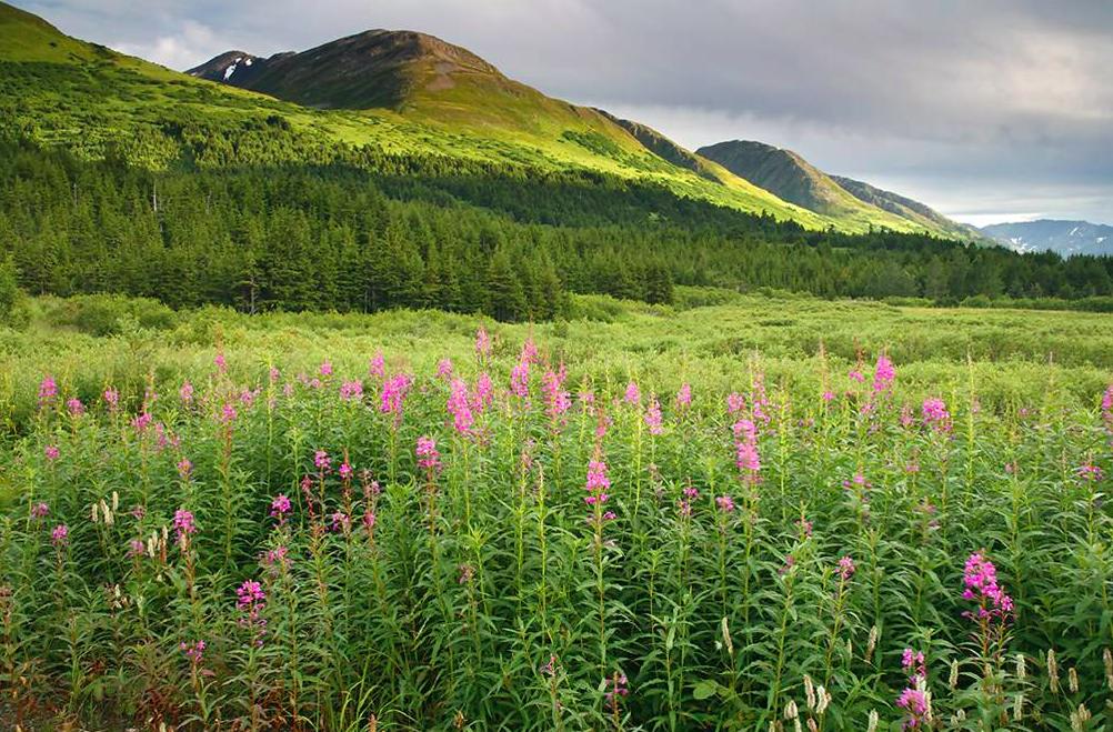 Turnagain Pass rest area, things to do Kenai Peninsula, Alaska Adventure destination