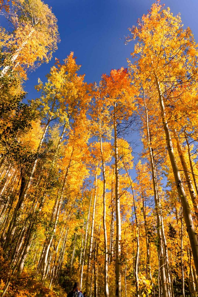 Fall colors on the Million Dollar Highway scenic drive